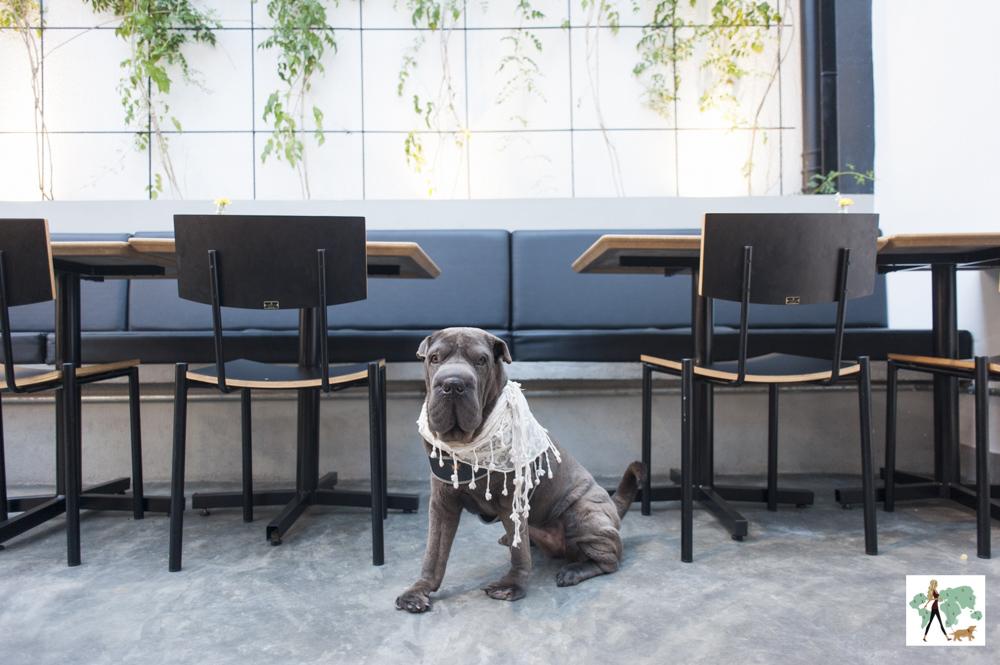 cachorro no restaurante Epi Gastronomia
