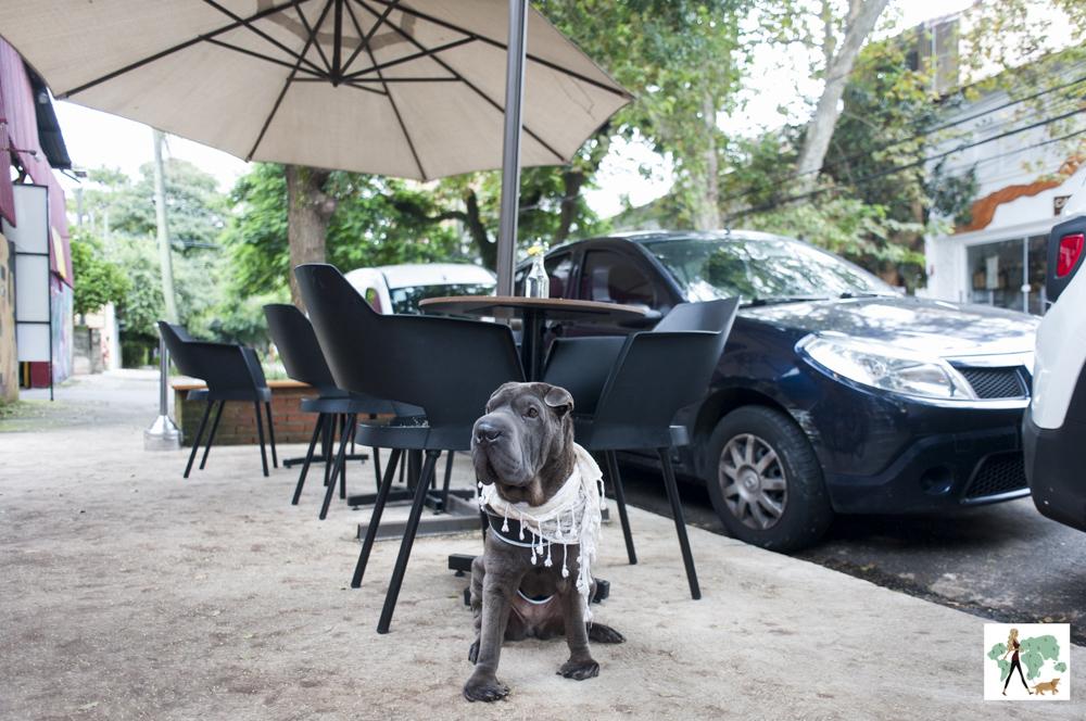 cachorro sentado na calçada do restaurante Epi Gastronomia