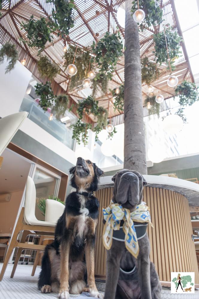 dois cachorros e teto de restaurante cheio de plantas penduradas