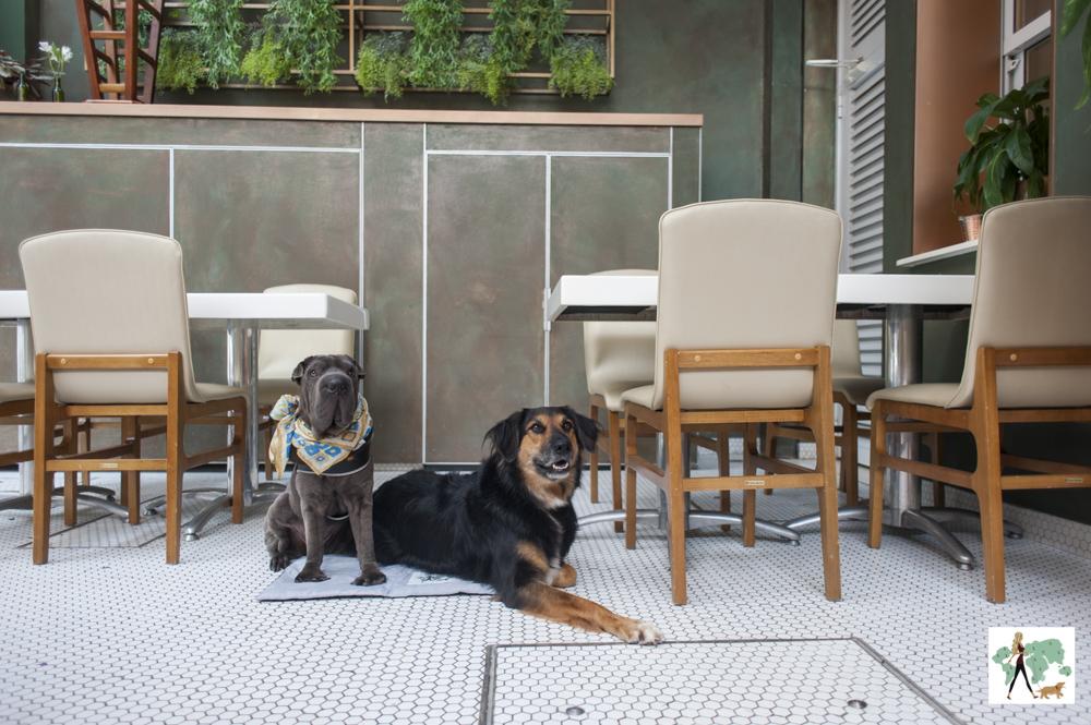 dois cachorros sentados na varanda do Mimo Restaurante