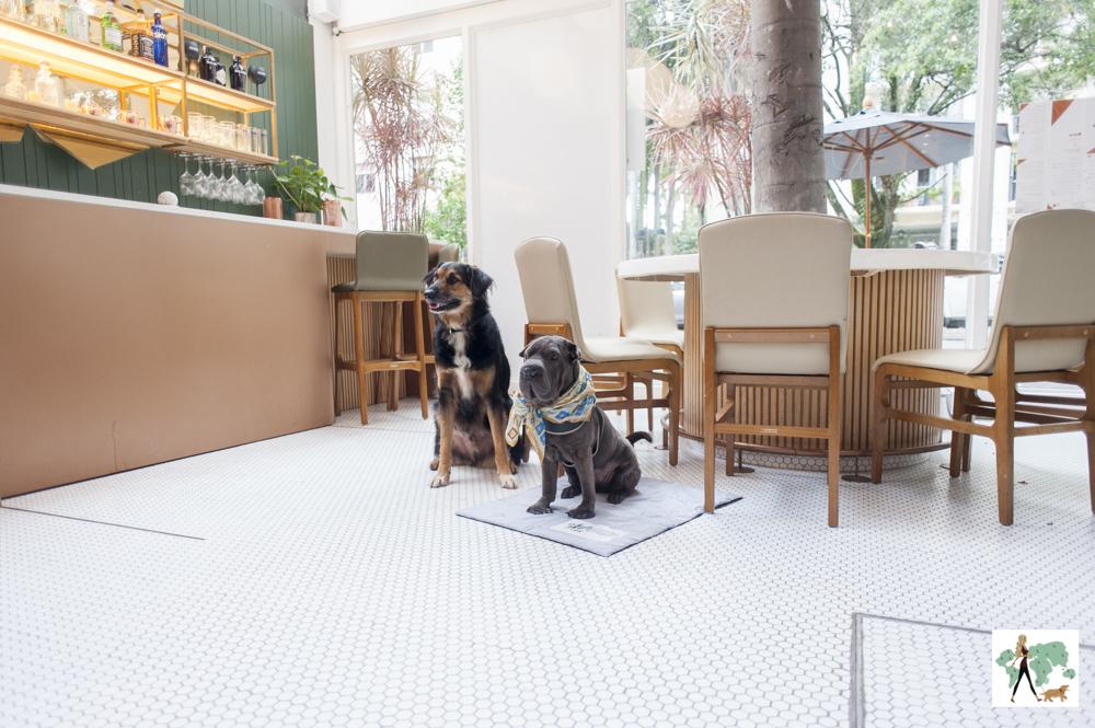 dois cachorros sentados na varanda do restaurante Mimo