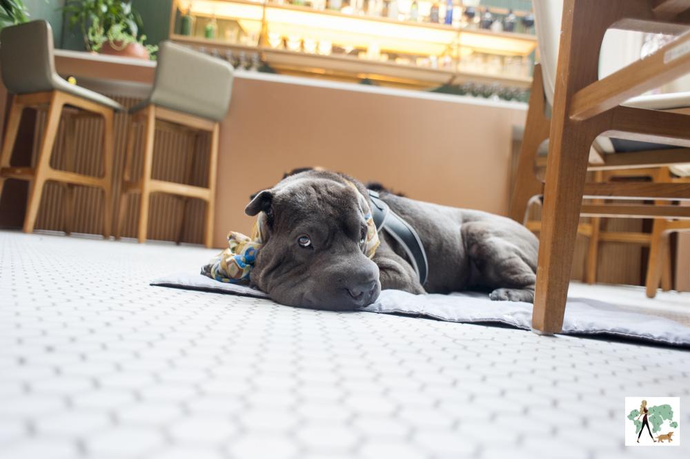 cachorro deitado em varanda do Mimo Restaurante