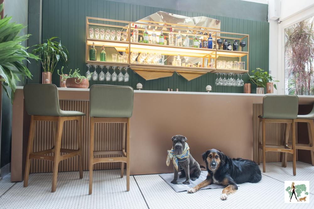 dois cachorros sentados perto do bar