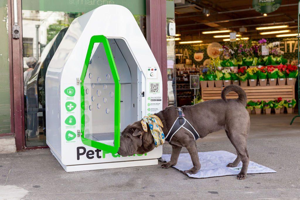 cachorro cheirando casinha