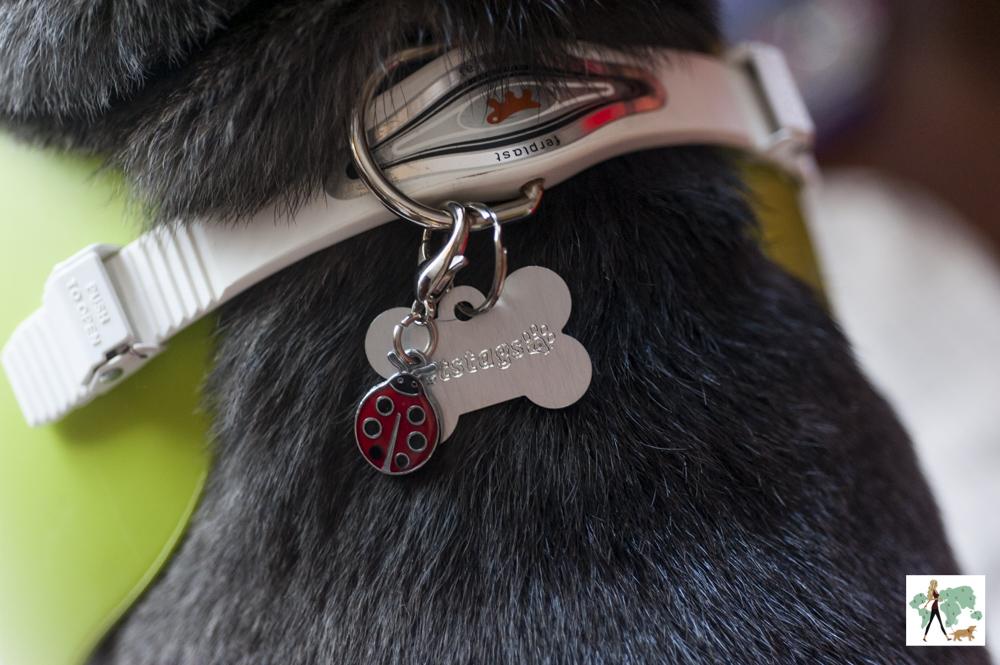 coleira de cachorro com plaquinha de identificação
