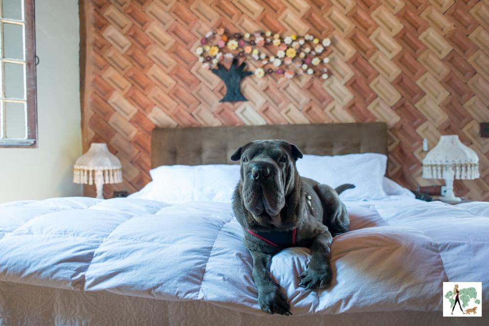 cachorro deitado em cima da cama da pousada Pegada da Onça