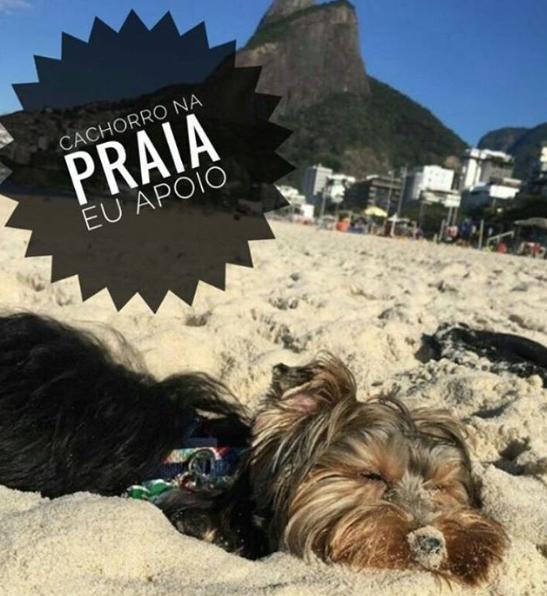 cachorro na areia