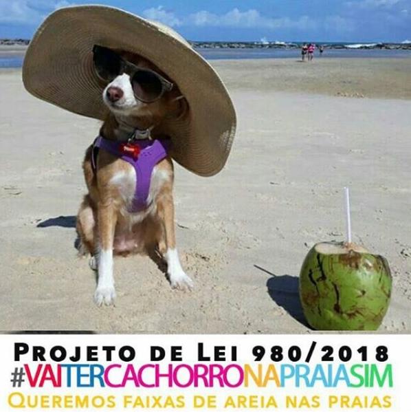 cachorro na praia de chapéu e um coco