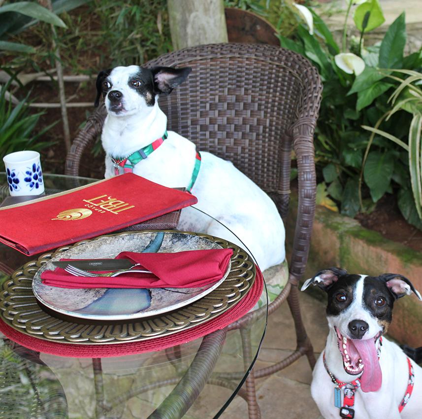 dois cachorros, um sentado na cadeira