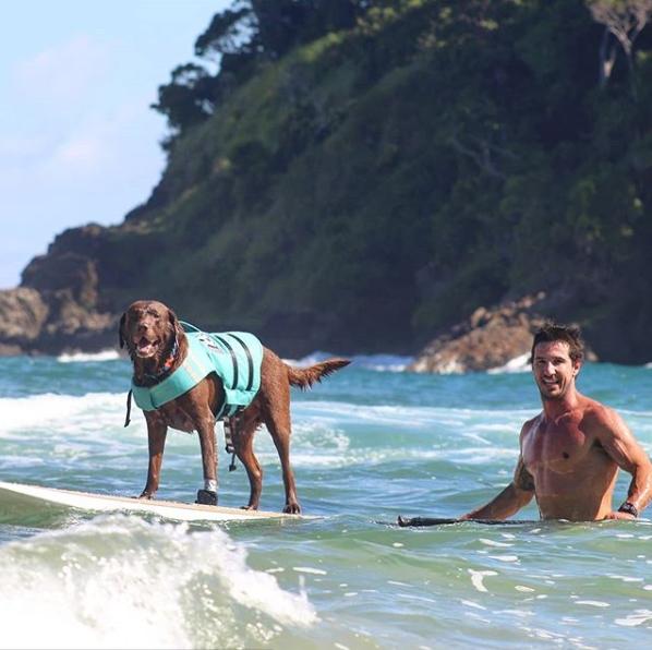 cachorro em pé na prancha e homem no mar