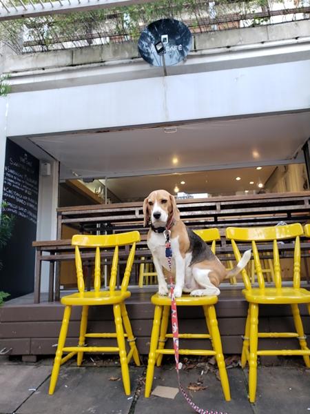 cachorro em cima da cadeira