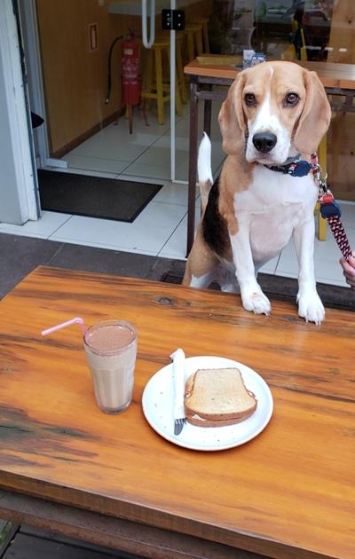 Copo de milkshake e sanduíche em cima de mesa e cachorro ao fundo