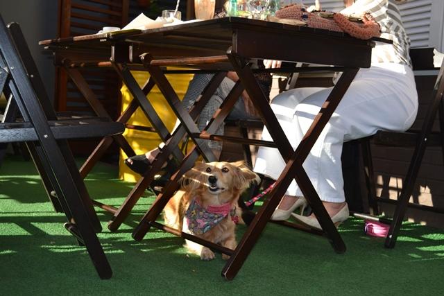 cachorro deitado debaixo da mesa