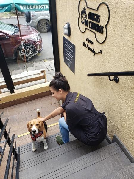 cachorro e mulher na escada