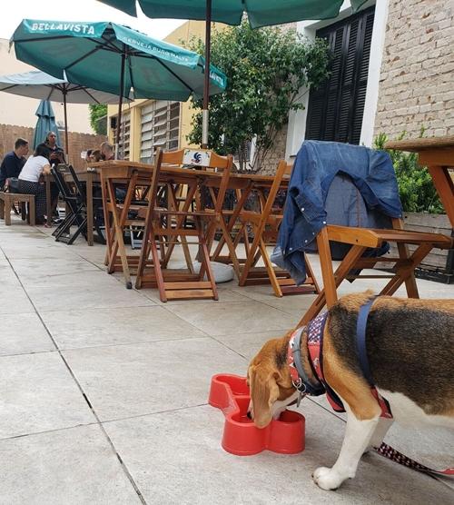 cachorro bebendo água