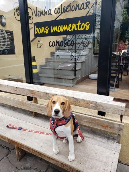 cachorro sentado em banco de lanchoete