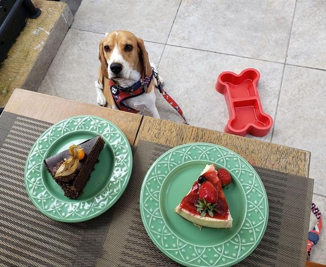 duas fatias de tortas servidas em pratos e um cachorro