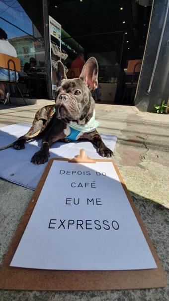 cachorro na calçada