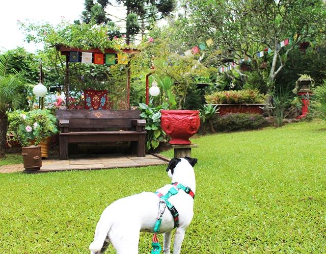 cachorro no gramado de restaurante tibetano