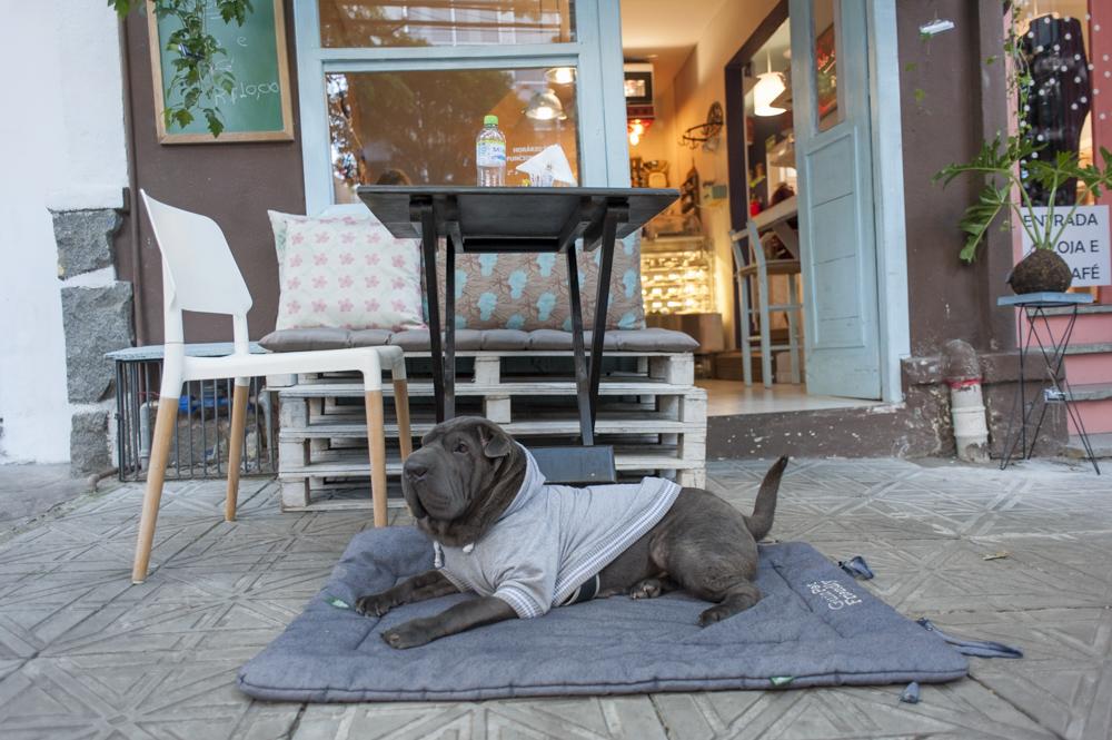 cachorro deitado em cima de colchonete na calçada de café