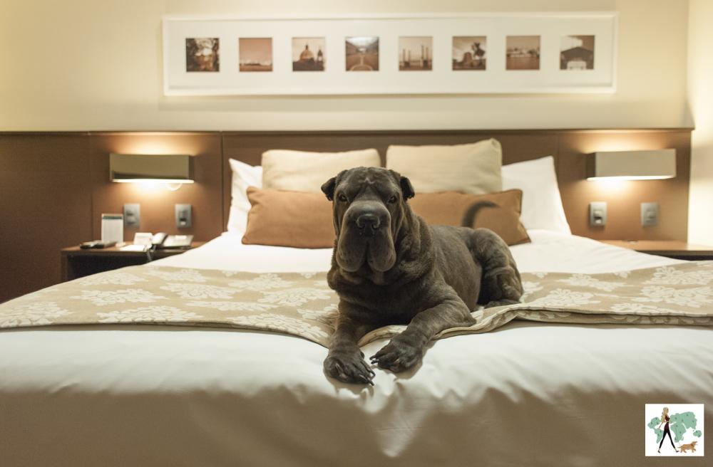 cachorro em cima da cama do hotel Deville em Porto Alegre