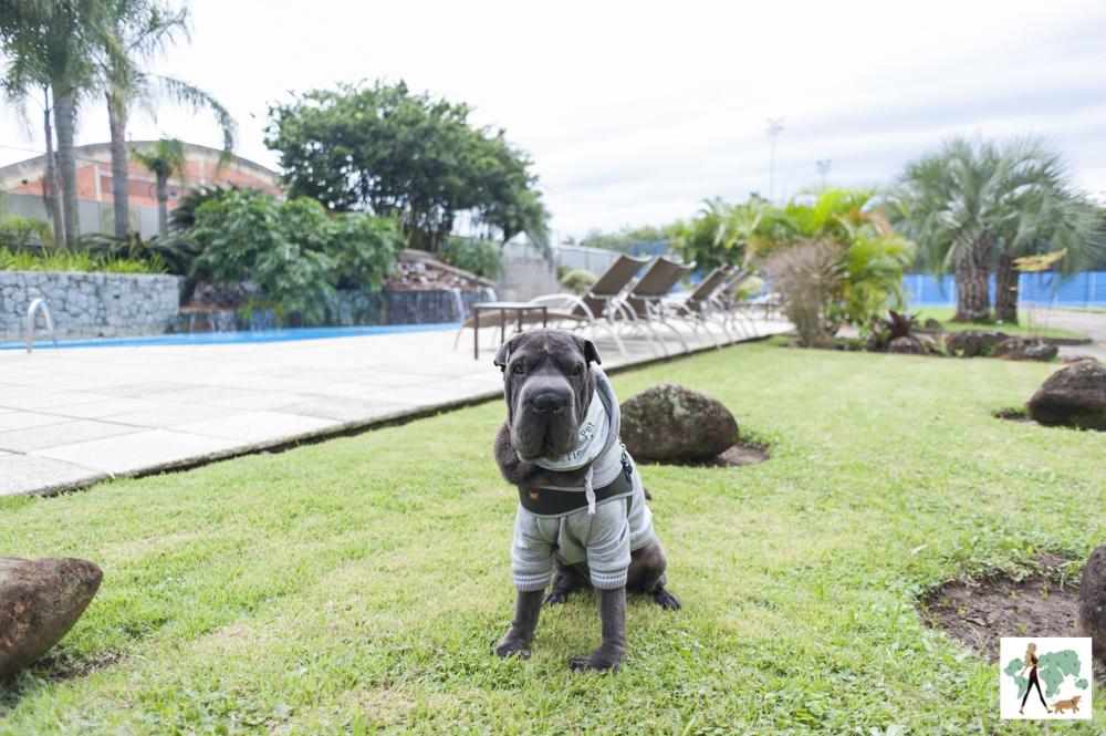 cachorro sentado na grama do hotel Deville de Porto Alegre