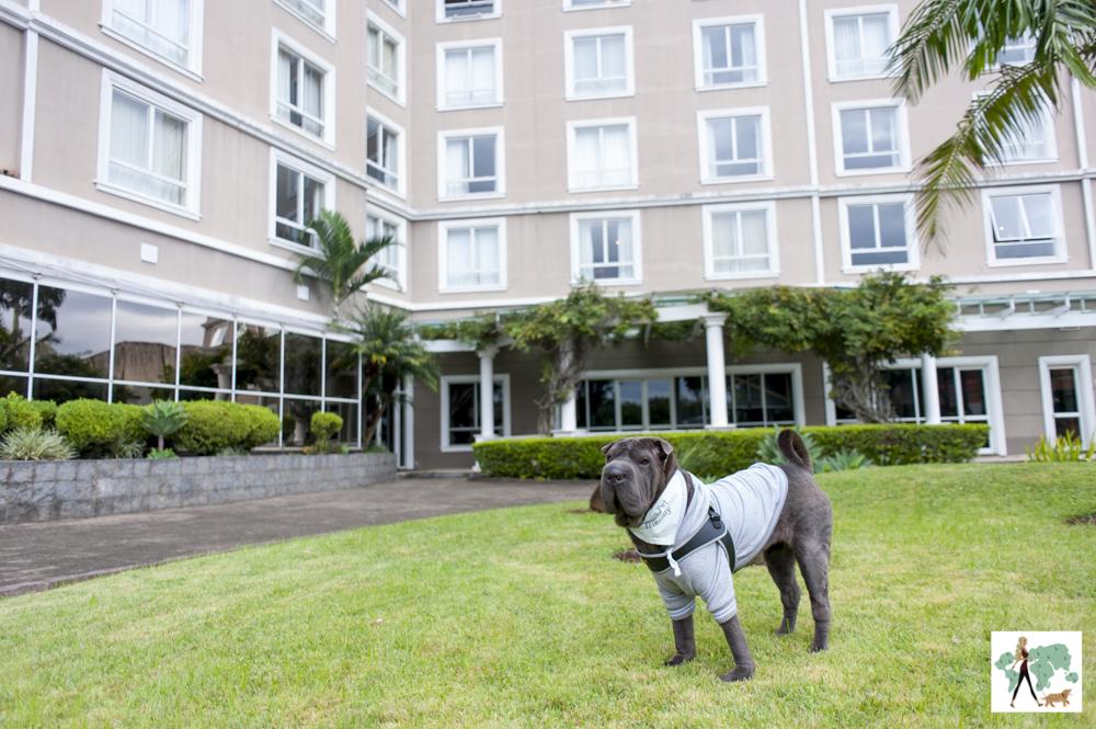 cachorro no jardim do hotel Deville de Porto Alegre