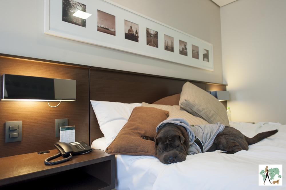 cachorro deitado em cima da cama do hotel Deville de Porto Alegre