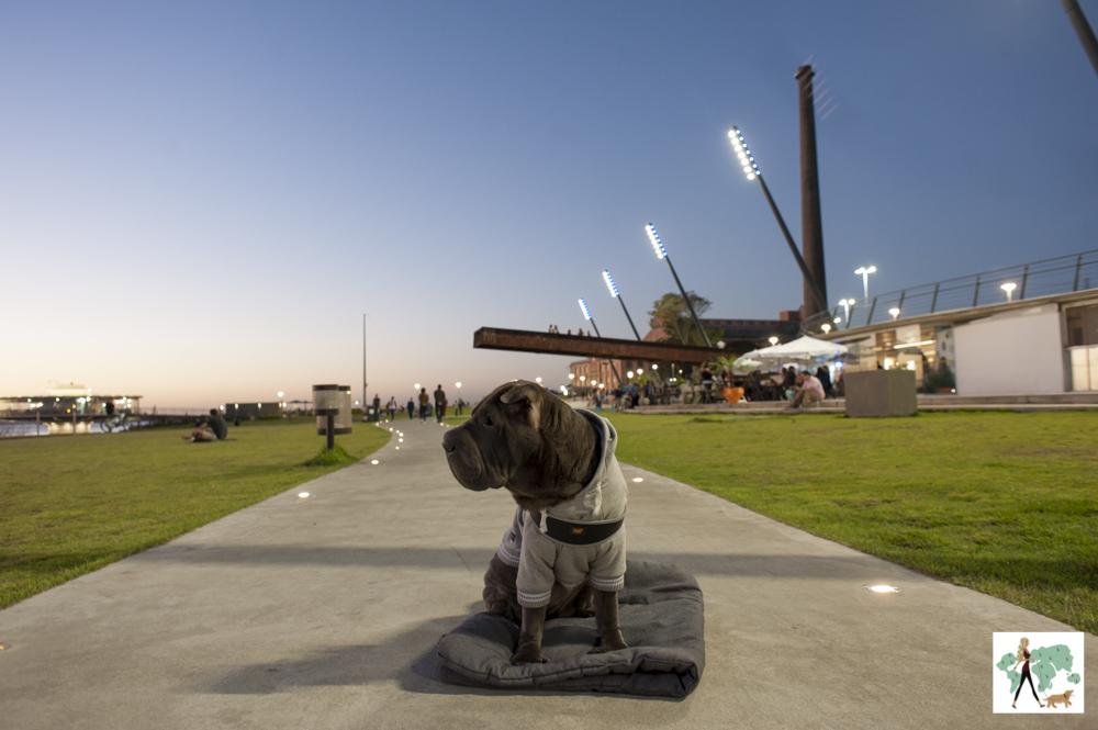 cachorro sentado na orla do Guaíba