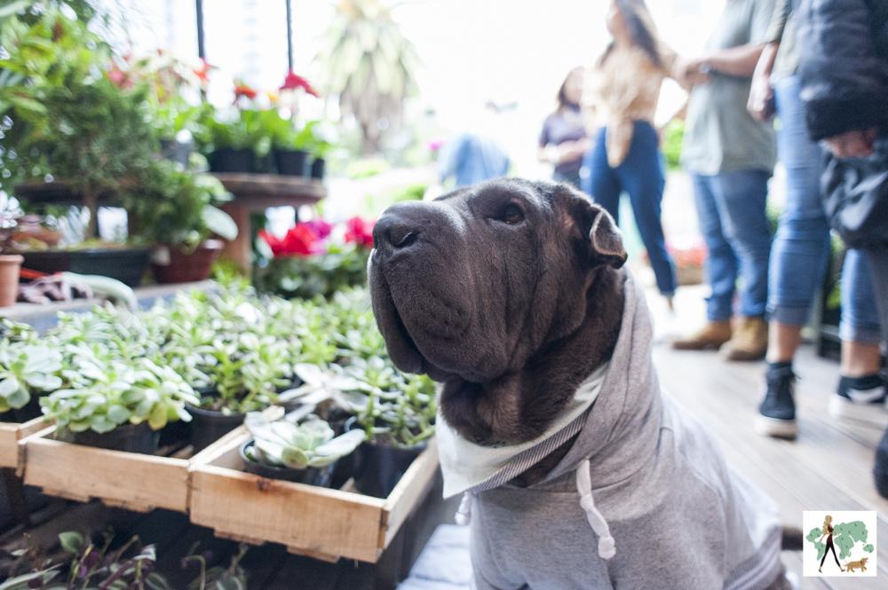 cachorro ao lado das plantas e flores