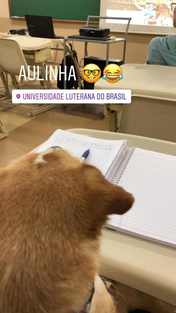 cachorro em sala de aula