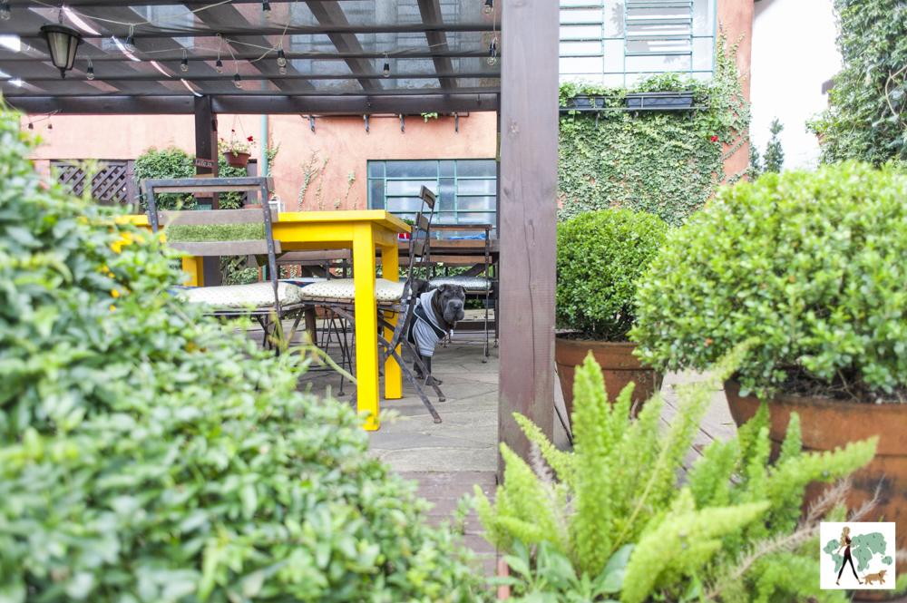 cachorro entre plantas e mesas de restaurante