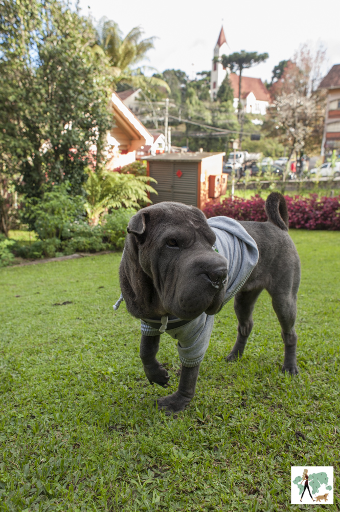 cachorro de pé em gramado
