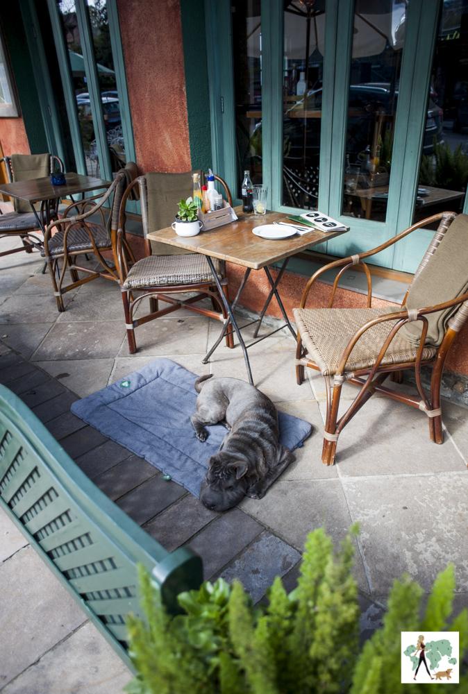 cachorro deitado na varanda do Josephina em Gramado