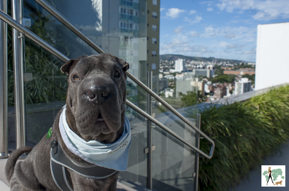 cachorro e vista para Porto Alegre