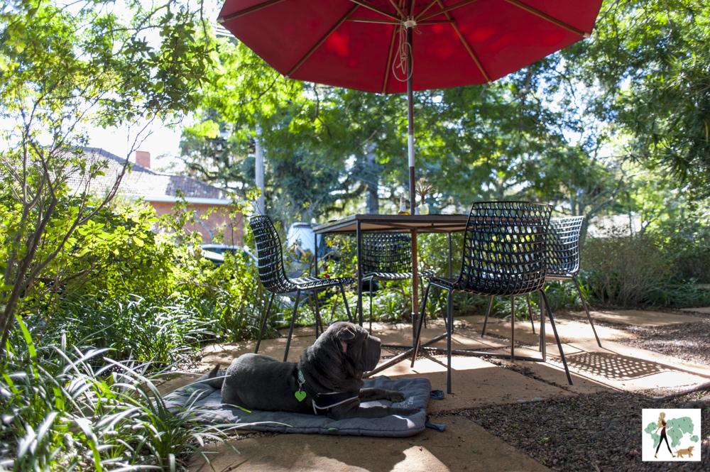 cachorro deitado ao lado de mesa do Le Bistrot
