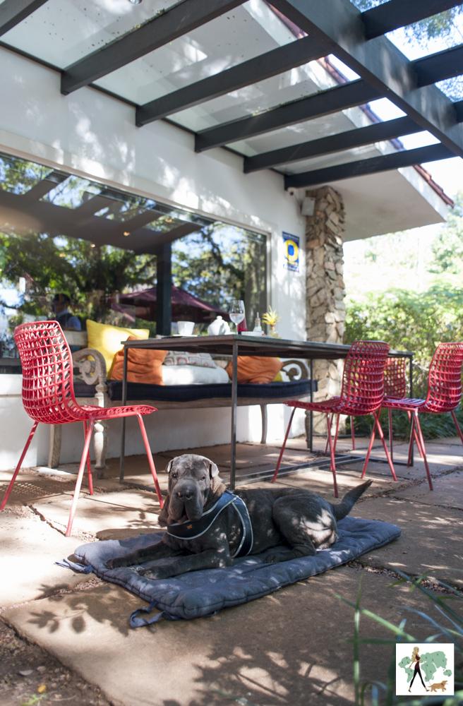 cachorro deitado ao lado de mesa de restaurante