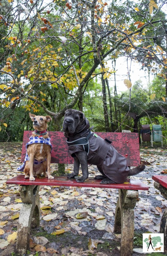 duas cadelas em cima de banco vermelho
