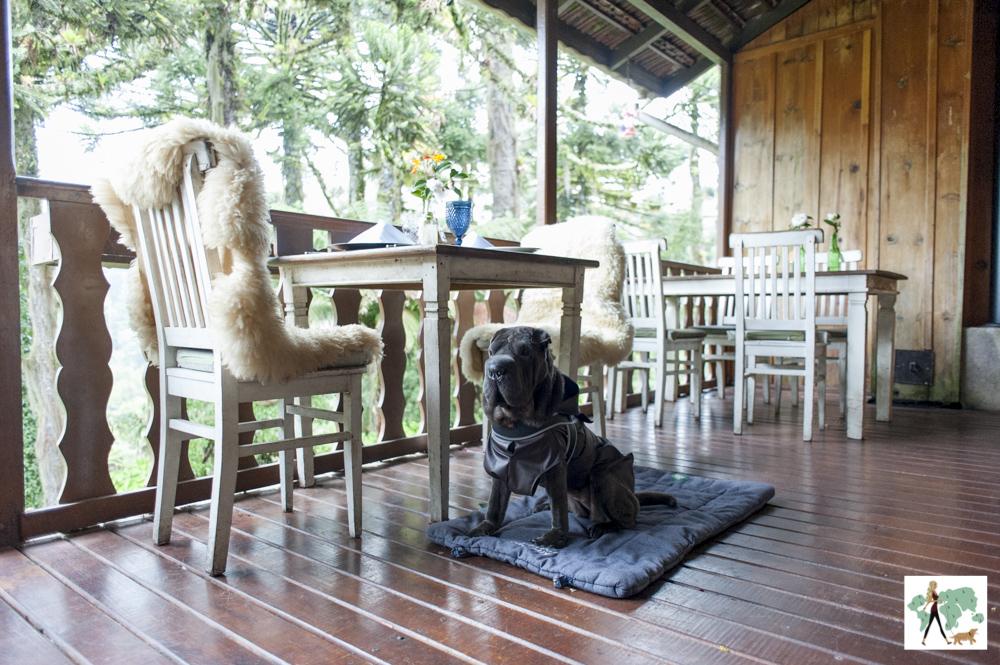 cachorro sentado na varanda do Parador Hampel