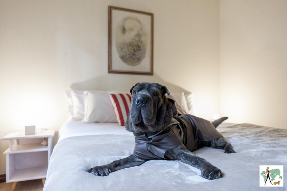 cachorro em cima da cama do Parador Hampel