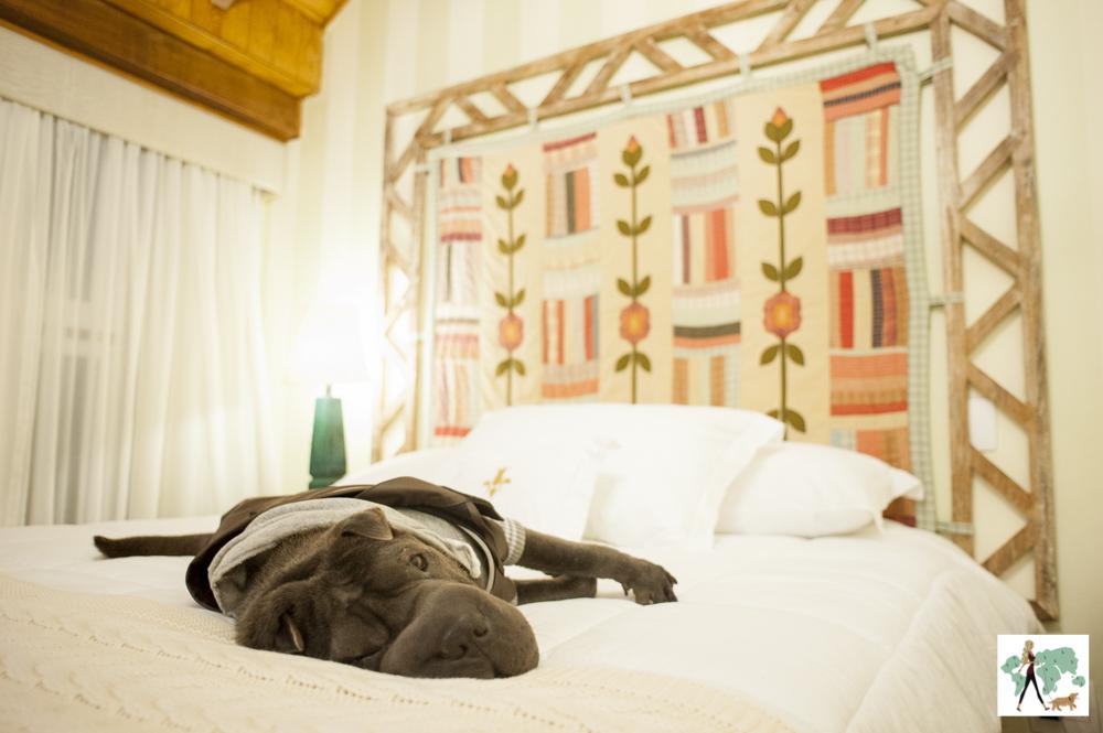 cachorro deitado em cama de hotel