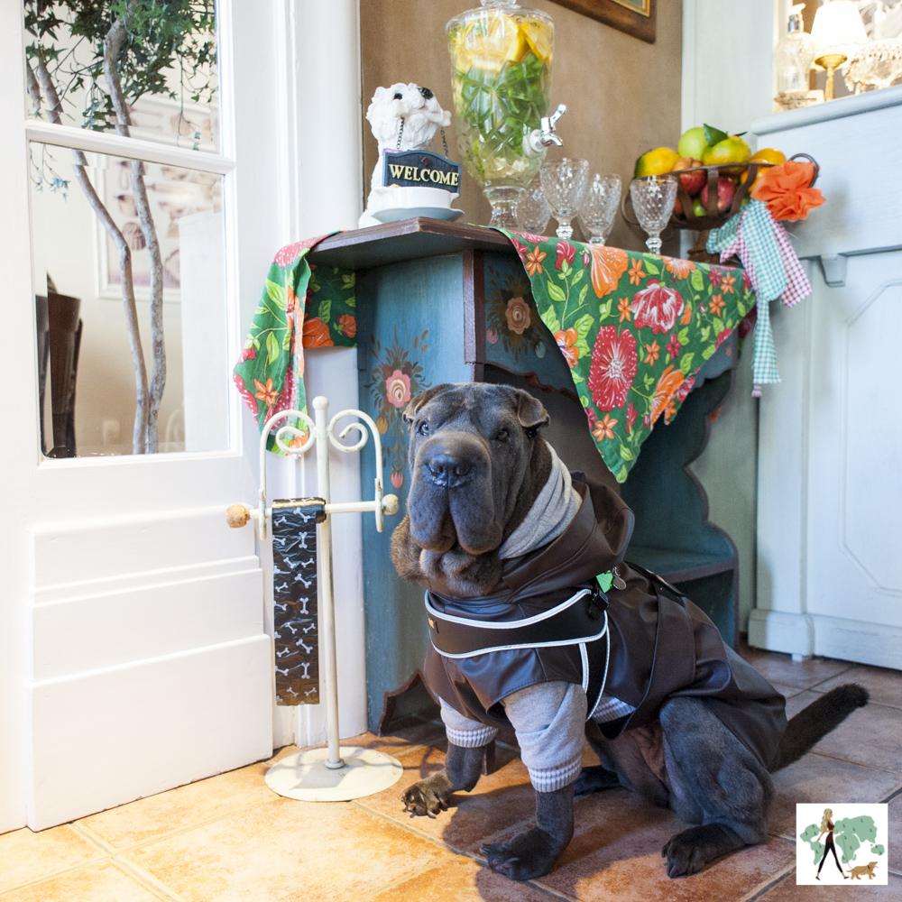 cachorro na recepção do hotel Petit Casa da Montanha