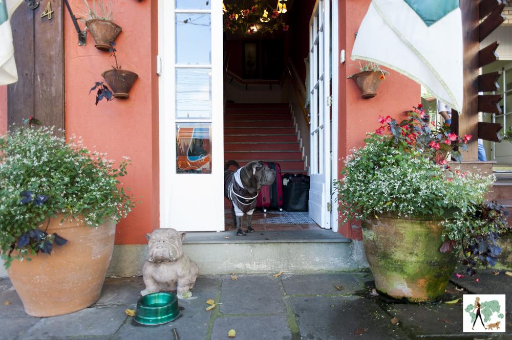 cachorro na porta de hotel