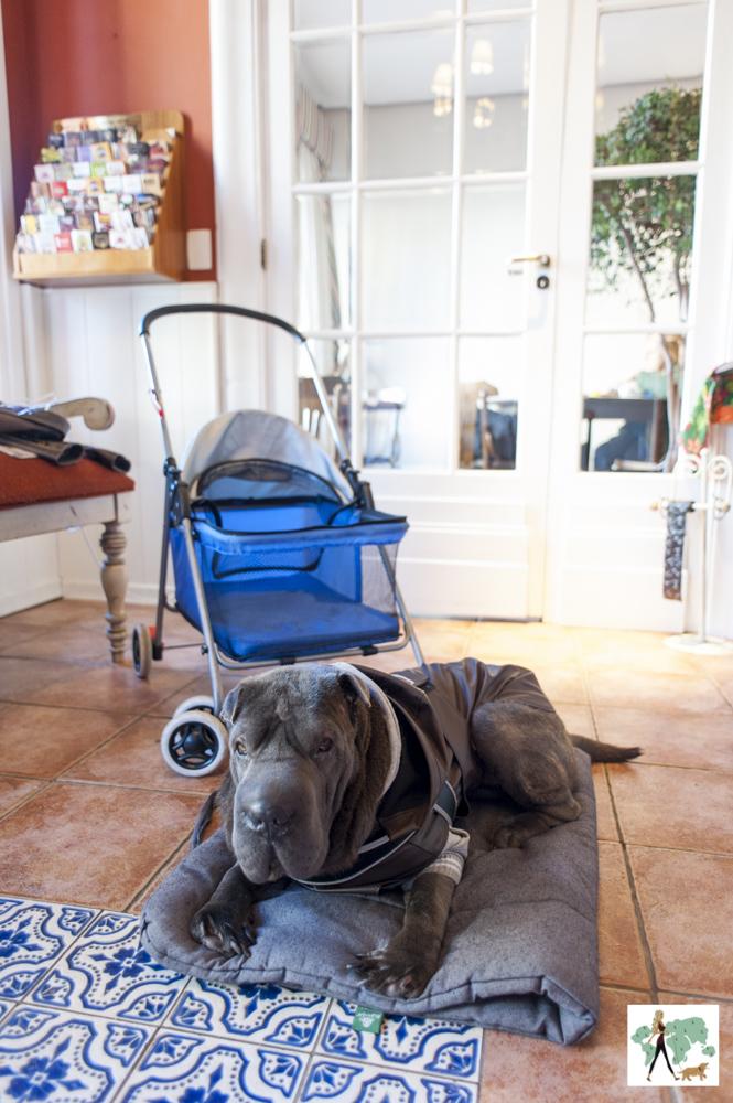 carrinho e cachorro na recepção do Petit Casa da Montanha