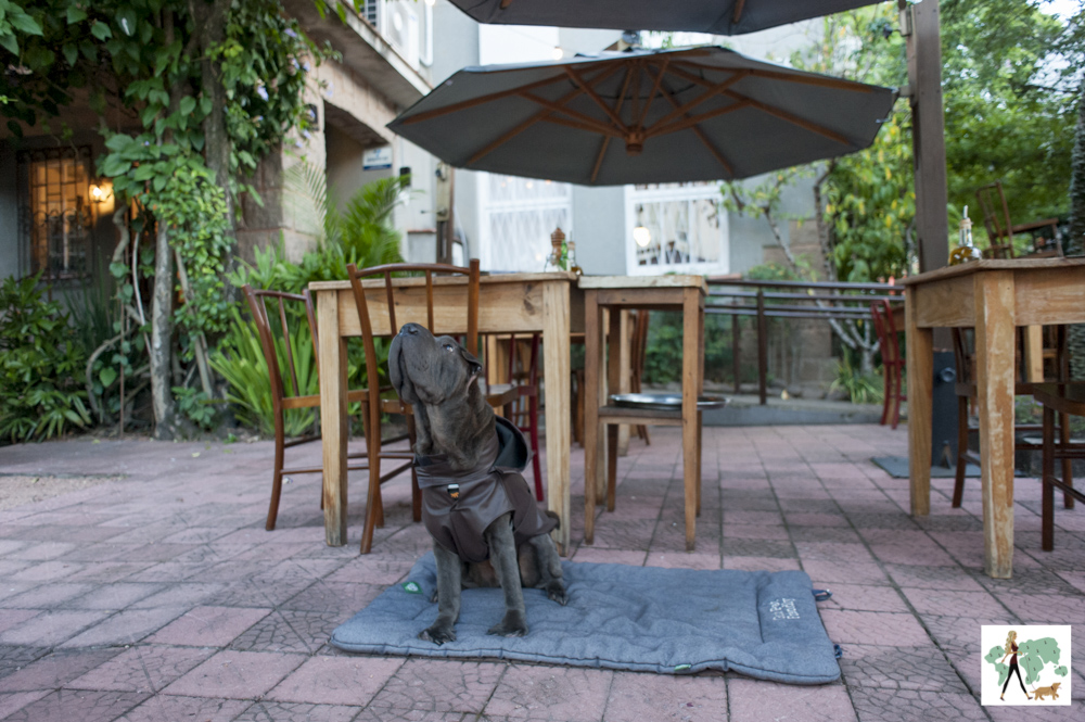 cachorro sentado perto de mesas do Puppi Baggio