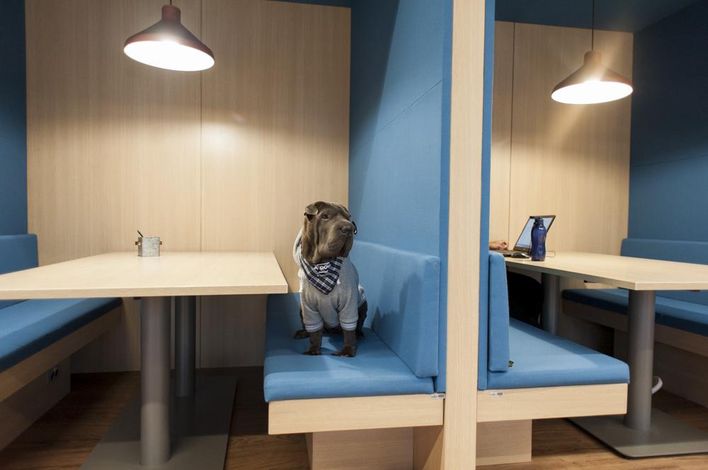 cachorro sentado em cima de banco do coworking Spaces