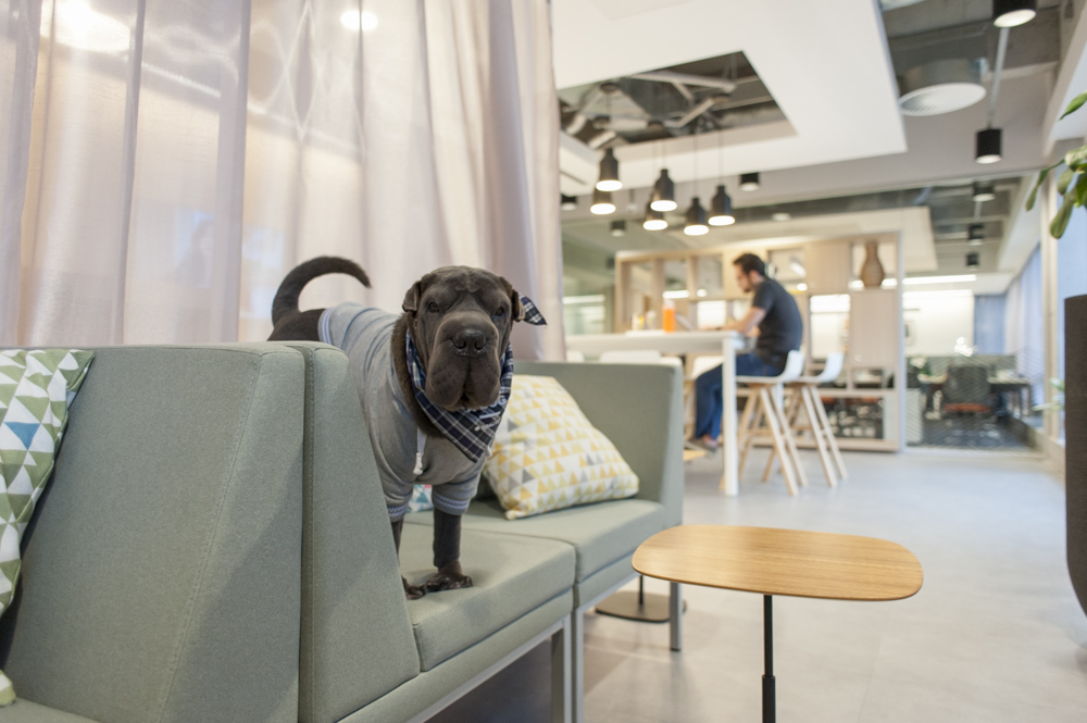 cachorro no coworking Spaces