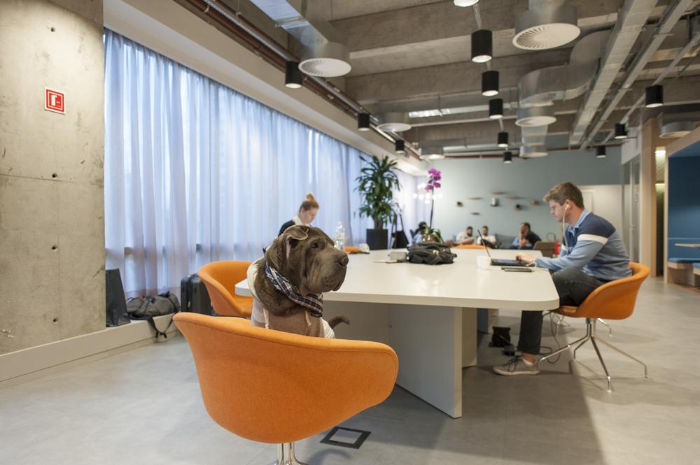 cachorro em cima de cadeira no coworking Spaces
