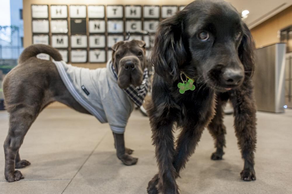 cachorros olhando para a câmera