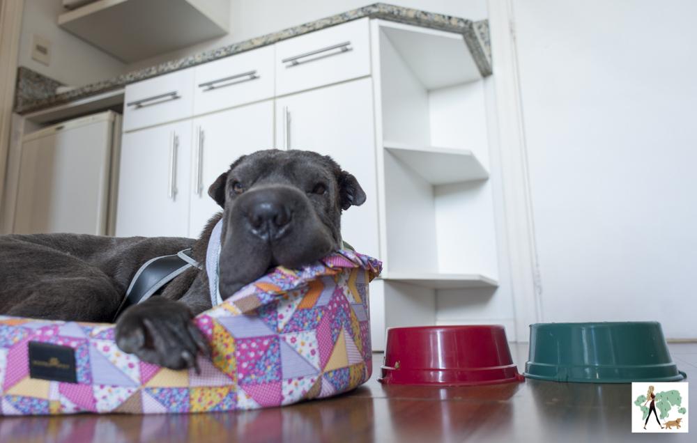 cachorro deitado em cama com potes de comida ao lado